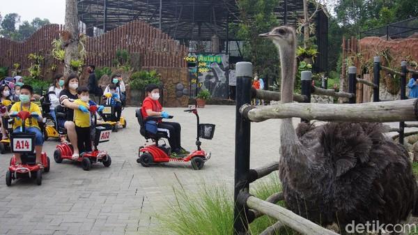 Lembang Park and Zoo memiliki kombinasi bermain out door dan kebun binatang. Traveler bisa melihat satwa sambil menaiki kendaraan. (Whisnu Pradana/detikcom)