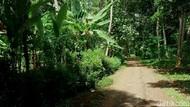 Di Dusun Sibimo Hanya Boleh Ada 7 Rumah, Apa yang Terjadi Kalau Lebih?
