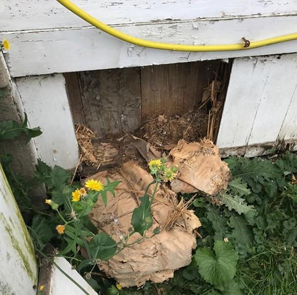 Mereka menemukan puluhan botol wiski dan juga kompartemen yang tersembunyi di bagin rumah mereka.