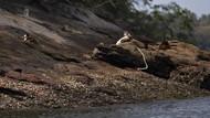 Foto Pulau Untuk Kucing Liar di Brasil
