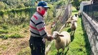 Ketika beraktivitas di luar ruangan, Carilli dan Nobili wajib mengenakan masker. Carilli yang sudah berusia 82 tahun, ingin menghabiskan masa tuanya dengan merawat domba, kebun anggur, sarang lebah, kebun buah-buahan, serta berburu jamur truffle. (Silvia Marchetti/CNN)