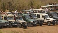 Agustus biasanya merupakan salah satu bulan tersibuk bagi wisatawan, menyumbang 10% dari total pengunjung tahunan Kenya, yakni ada sekitar 250.000 pelancong.Negara itu kini hanya menyambut kurang dari 15.000 turis di bulan itu.