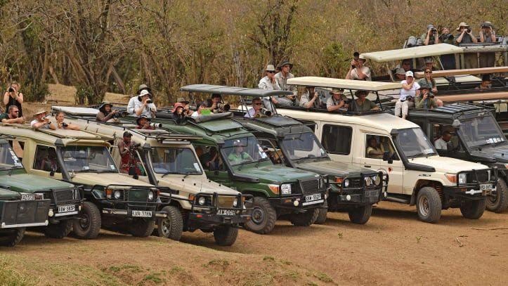 Migrasi hewan Maasai Mara Afrika