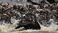 Safari Migrasi Hewan Terbesar di Bumi Kini Sepi Wisatawan