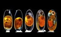 Small World Photomicrography Nikon 2020