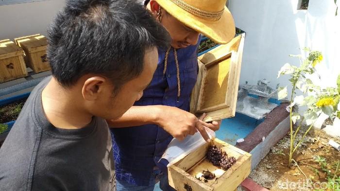 Amar Thohir (37) melakukan budidaya lebah tetragonula leaviceps atau lebah teuweul di halaman belakang rumahnya yang terletak di Desa Bojong Kecamatan Kramatmulya.