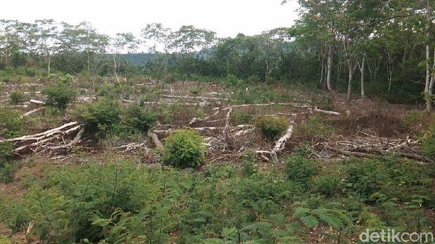 hutan di lereng kaki Gunung Wilis