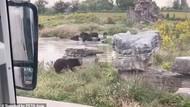 Detik-detik Penjaga Kebun Binatang di China Tewas Diserang Beruang