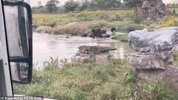 Penjaga Kebun Binatang di China tewas Diserang Beruang