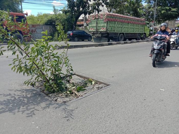 Pohon di tengah jalan Yos Sudarso Medan (Ahmad Arfah-detikcom)