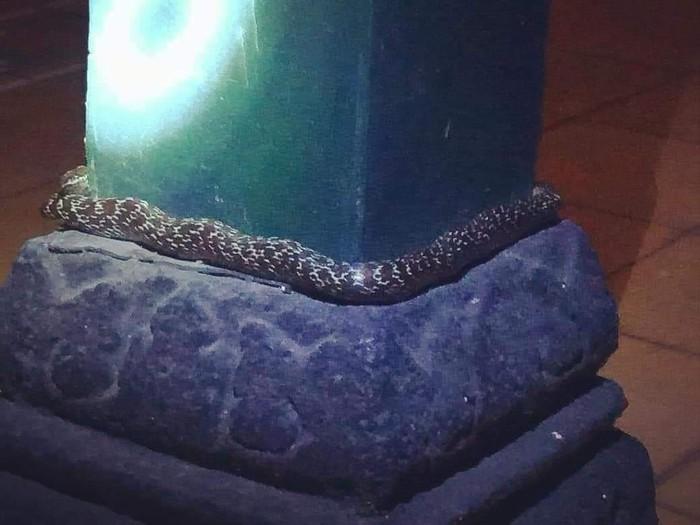 ular melingkar di tiang bangsal keraton yogya