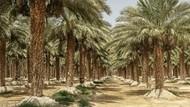 Menghidupkan Lagi Pohon Kurma yang Punah Ratusan Tahun Silam