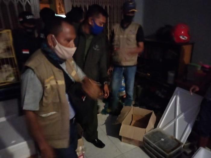 KLHK Sulawesi menangkap seorang pria yang hendak memperdagangkan ribuan ekor labi-labi moncong babi (dok. Istimewa)
