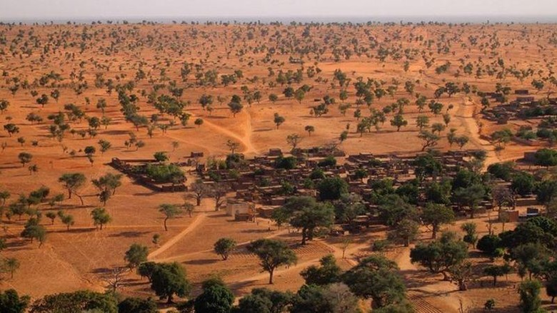Pohon di Gurun Sahara