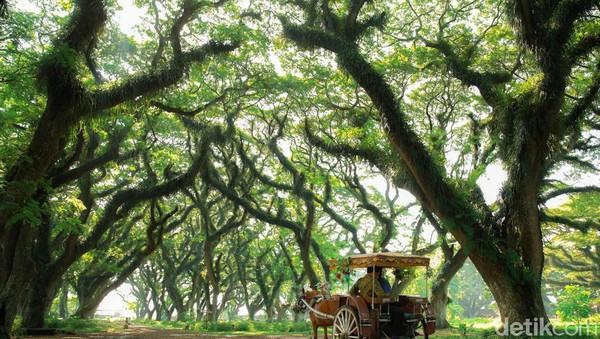 Secara teknis, angkutan wisata gratis ini akan diberangkatkan dari halaman parkir Taman Sritanjung menuju 4 destinasi. Yakni, Taman Nasional (TN) Alas Purwo, Pantai Pulau Merah, Kawah Ijen, dan Taman Nasional Baluran.