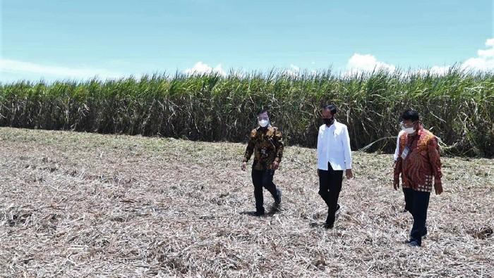 Presiden Joko Widodo (kiri), pemilik pabrik gula PT Prima Alam Gemilang Andi Syamsuddin Arsyad (kanan) dan mantan Menteri Pertanian Amran Sulaiman (tengah) mengunjungi lahan perkebunan tebu di Kabupaten Bombana, Sulawesi Tenggara, Kamis (22/10/2020). Presiden Joko Widodo meresmikan pengoperasian pabrik gula berkapasitas giling hingga 12.000 ton cane per day (TCD) di Kabupaten Bombana. ANTARA FOTO/Biroperskepresiden/JJ/foc.