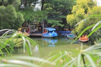 Kampung Tulip juga populer sebagai tempat pre-wedding. (Siti Fatimah/detikcom)