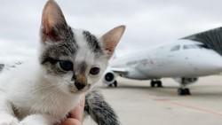 Berkeliaran di Landasan Pesawat, Kucing Ini Diadopsi Petugas Keamanan