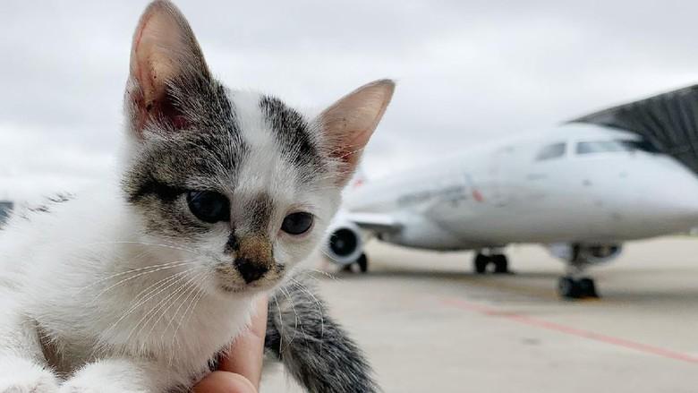 Kucing ditemukan di landasan pesawat