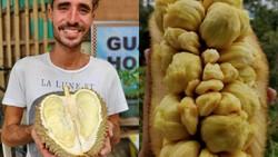 Pria Ini Sudah Cicip 300 Buah di Dunia, Jatuh Cinta pada Cempedak Indonesia!