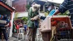 Dinas KPKP DKI Jakarta memberikan vaksin kepada hewan peliharaan seperti kucing dan anjing. Vaksinasi gratis berlangsung hingga 27 Oktober 2020.