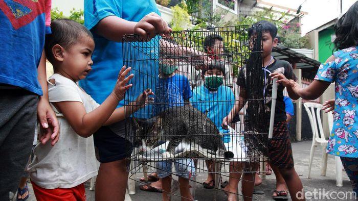 Warga antusias membawa hewan peliharaan di layanan vaksinasi rabies gratis di Johar Baru, Jakarta Pusat, Kamis (21/10/2020). Layanan tersebut dilakukan oleh Dinas Ketahanan Pangan, Kelautan dan Pertanian DKI Jakarta Pusat. Vaksinasi gratis tersebut akan berlangsung hingga 27 Oktober pekan depan.
