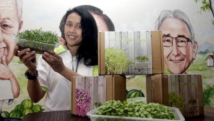 Di masa pandemi COVID-19 ini banyak warga yang menanam sayur di rumah. Hal ini dimanfaatkan Ewindo dengan meluncurkan microgreens kit sayur super mini.