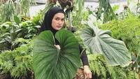 Wanita Ini Sukses Bisnis Tanaman Hias, Jadi Langganan Artis dan Selebgram