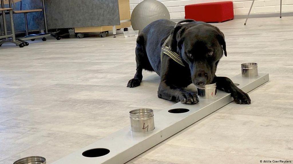 Mampu Deteksi Corona, Mengapa Anjing Tak Digunakan Kendalikan Pandemi?