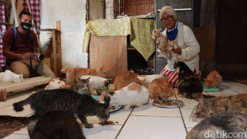 Kisah Janda Tua di Bandung Hidup Bersama 90 Kucing Liar