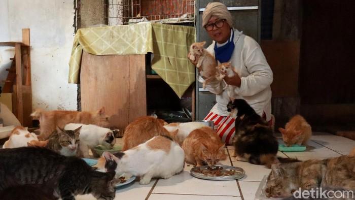 Seorang janda tua sebatang kara tinggal bersama lebih dari 90 kucing liar di rumahnya yang ada di Bandung. Seperti apa kisah dan potretnya? Lihat yuk.