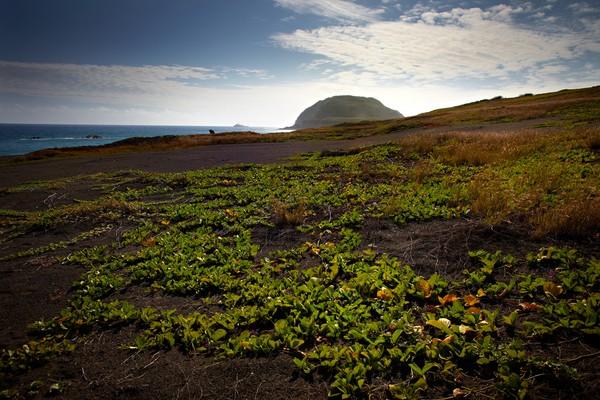 Pulau ini juga terkenal akan kenampakan alamnya yakni Gunung Suribachi. Gunung ini disebut-sebut sebagai gunung api paling berbahaya di dunia. (Foto: Getty Images/iStockphoto/jriedy)