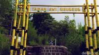 Selain itu ada juga taman kuning yang jadi ikon dari Kebun Raya Kuningan. Di taman kuning ini terdapat aneka bunga berwarna kuning yang telah ditata rapi. (Bima Bagaskara/detikcom)