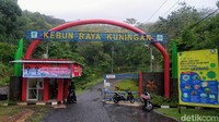 Kebun Raya Kuningan terletak di Desa Padangbenghar, Kecamatan Pasawahan. Untuk dapat menuju lokasi wisata ini, traveler memerlukan waktu kurang lebih 80 menit berkendara dari pusat kota Kuningan. (Bima Bagaskara/detikcom)