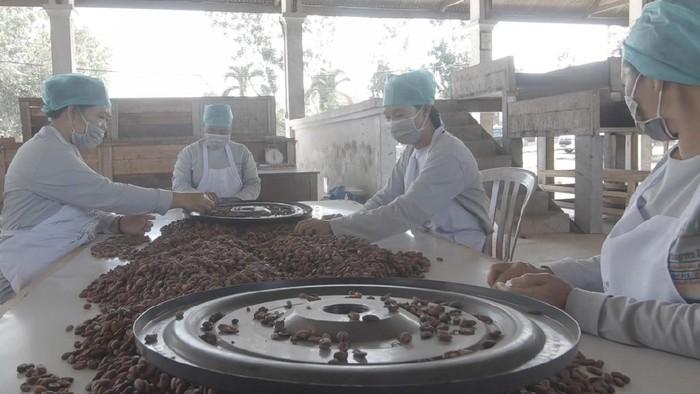 Petani Kakao di Bali