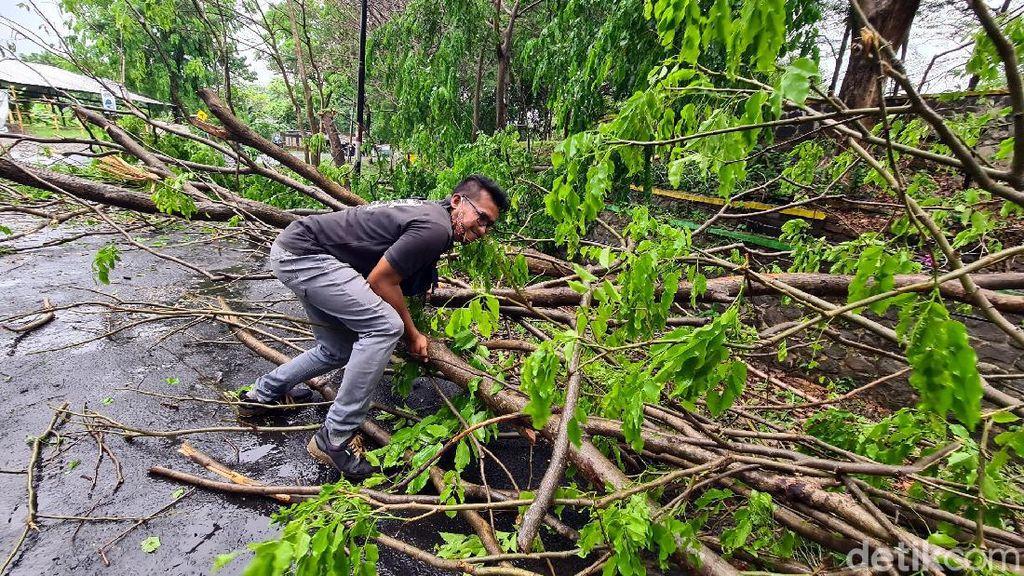 Pohon Tumbang Timpa Pemotor di Palabuhanratu Sukabumi