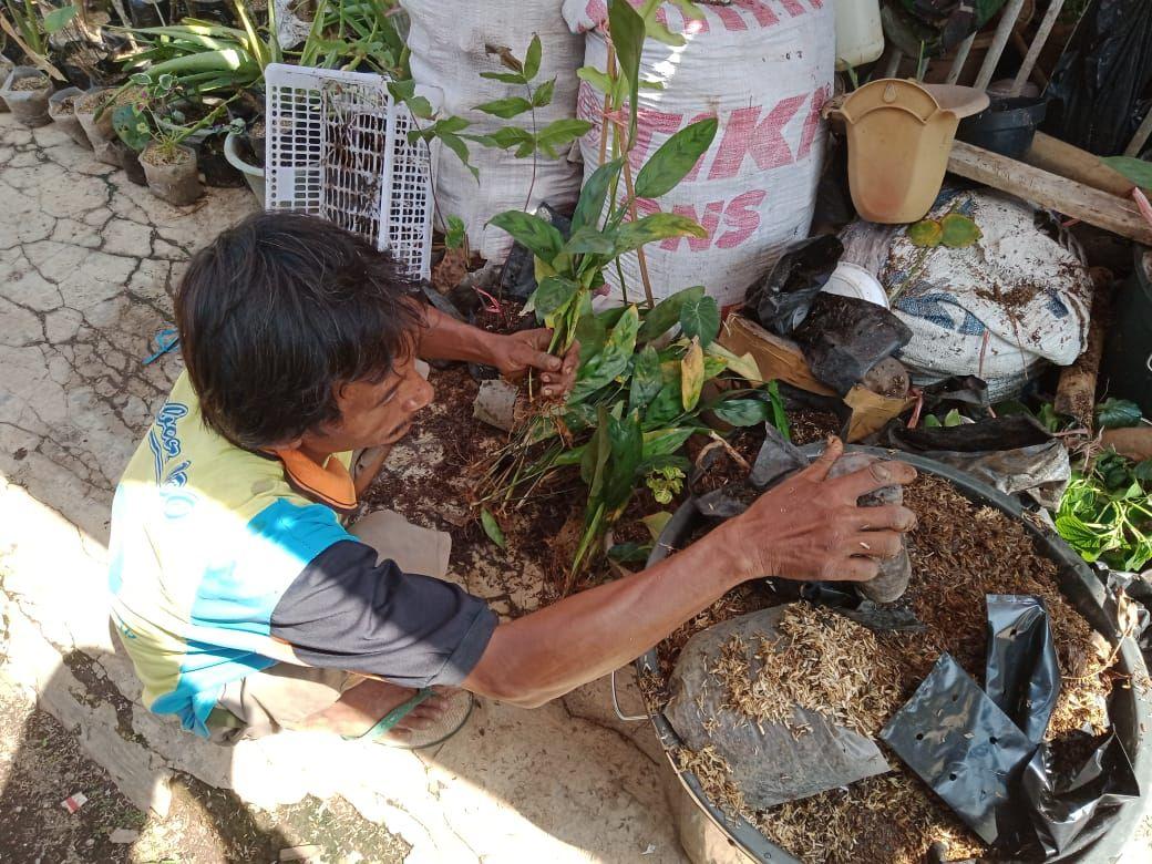 Ekawati pemilik bisnis tanaman hias Airy Garden