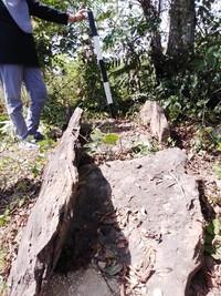 Namun, beberapa titik temuan yang ada itu, di antaranya sudah dalam keadaan rusak akibat penjarahan harta benda yang ikut dikuburkan. Manusia Kalang memiliki ritual penguburan yang unik. (Febrian Chandra/detikcom)