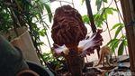 Potret Bunga Bangkai yang Muncul di Bandung