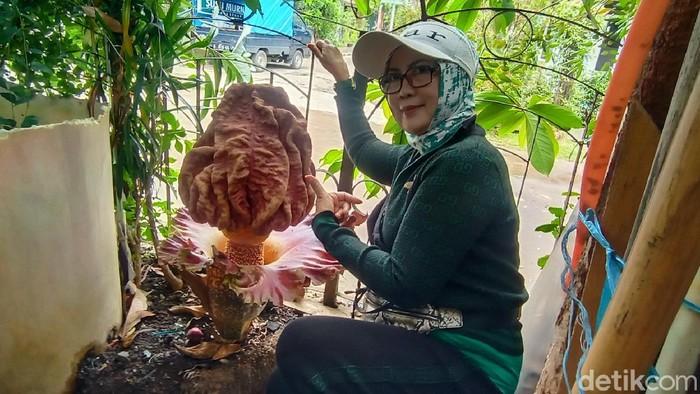 Sekuntum bunga bangkai muncul di halaman rumah warga di Kecamatan Arcamanik, Kota Bandung, Jawa Barat. ini foto-fotonya.