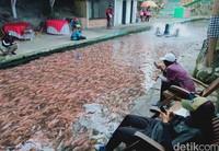 Kini Sungai Gejigan jadi tempat wisata gratis untuk melihat ikan dan foto-foto.