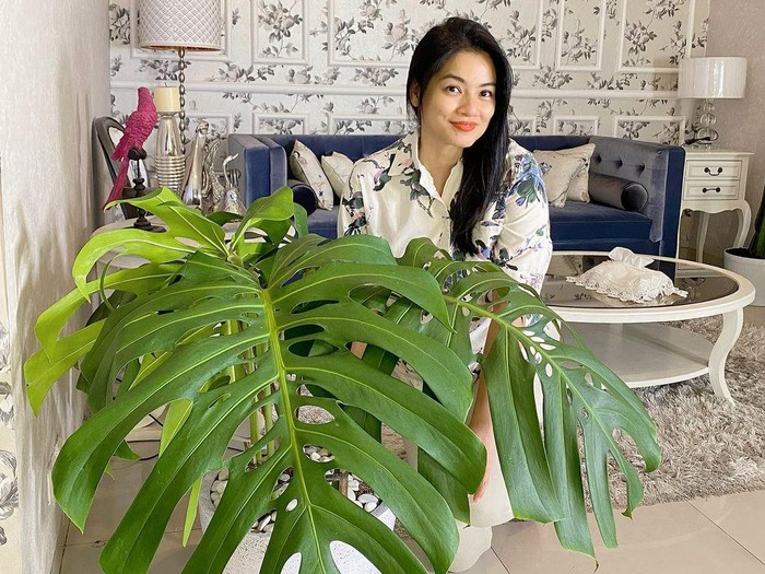 Titi Kamal yang hobi koleksi tanaman hias