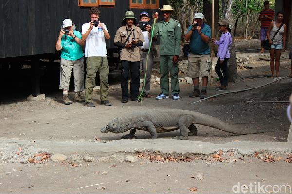 Taman Nasional Komodo sudah diakui UNESCO pada 1991. Taman yang berada di Nusa Tenggara Timur ini merupakan habitat satwa endemik Komodo. (Dadan Kuswaraharja)