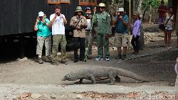 Pulau Rinca Beres Dibangun, Turis Dilarang Berinteraksi dengan Komodo