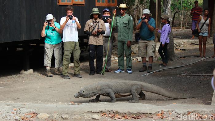 Wisatawan dan ranger memperhatikan Komodo di Pulau Rinca.