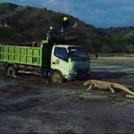 Asal Muasal Ramai Truk Vs Komodo