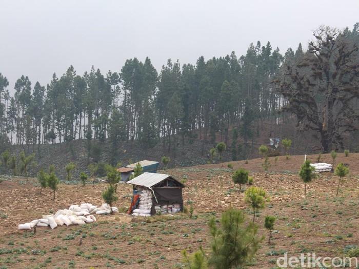 Kondisi hutan di Kecamatan Sirampok, Brebes, Senin (26/10/2020).