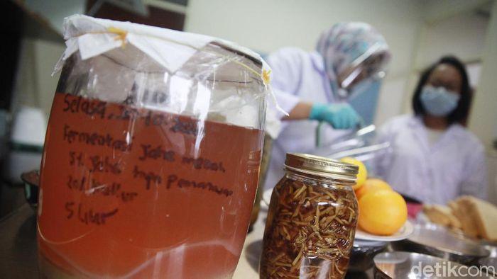 Jahe merah diklaim dapat meningkatkan imun tubuh yang berguna mengalau penyebaran virus Corona di masa Pandemi.