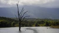 Selama perjalanan ke sana pengunjung akan bisa menikmati pemandangan pegunungan Meratus dengan hutan hujan tropis yang masih terjaga keasriannya.