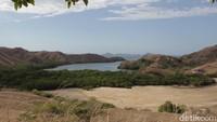 Fakta-fakta Habitat Komodo Selain di Taman Nasional Komodo